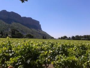 wijngaarden_cassis